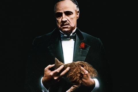 The-Godfather-cat
